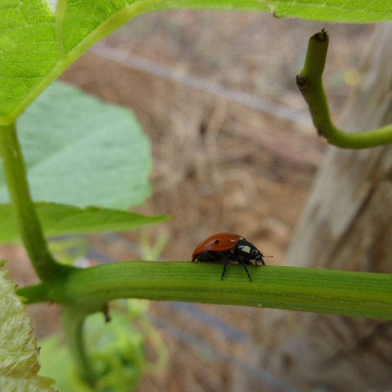 The Biodiversity and the Wine